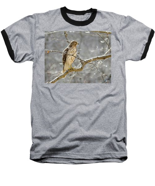 Hawk On Lookout Baseball T-Shirt by George Randy Bass