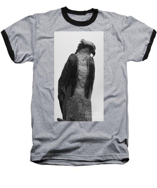 Hawk Perched Baseball T-Shirt