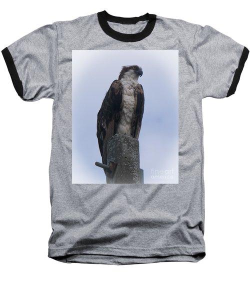 Hawk Pose Baseball T-Shirt