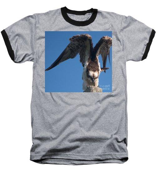 Hawk Prepares For Flight Baseball T-Shirt