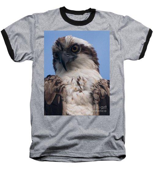Hawk Profile Baseball T-Shirt