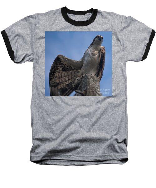 Hawk Stretching Baseball T-Shirt