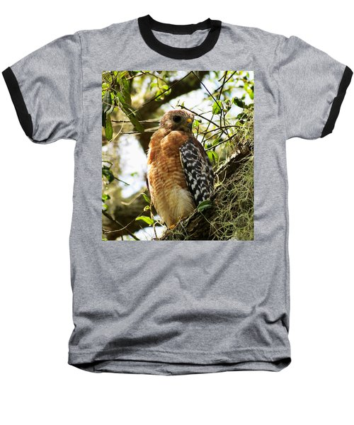 Hawk Taking A Rest On A Tree In Lakeland Florida Baseball T-Shirt