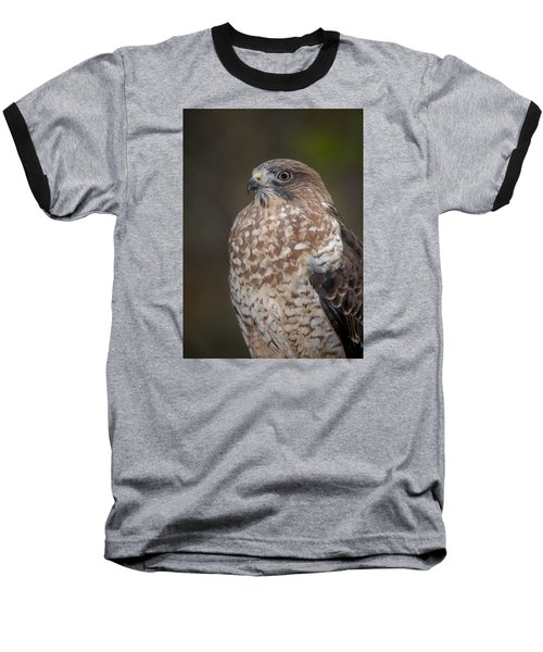 Hawk Baseball T-Shirt by Tyson and Kathy Smith