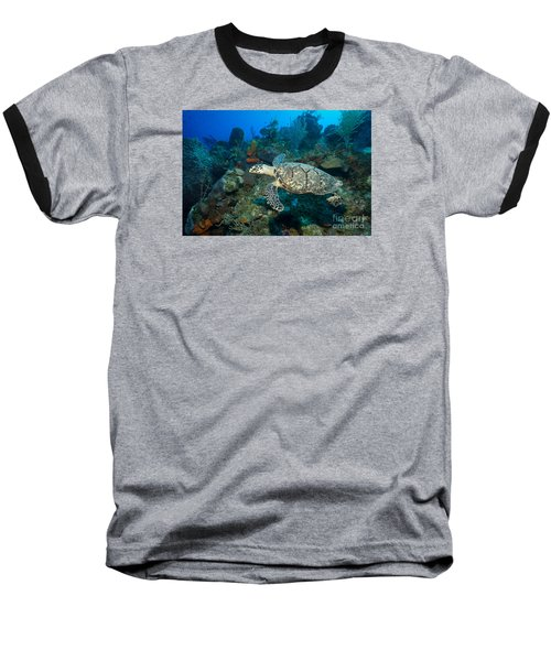 Baseball T-Shirt featuring the photograph Hawksbill Haunt by Aaron Whittemore