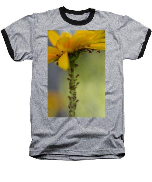 Heliopsis Infested Baseball T-Shirt by Janet Rockburn