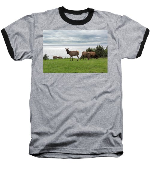 Herd Of Elk At Ecola State Park Baseball T-Shirt