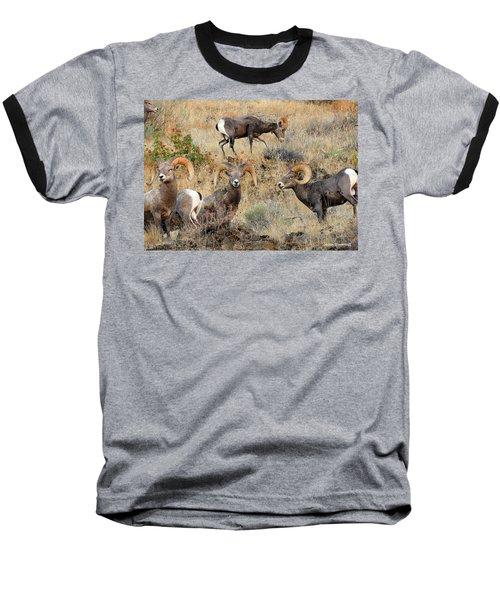 Hierarchy Baseball T-Shirt