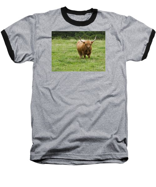 Highland Cattle Baseball T-Shirt