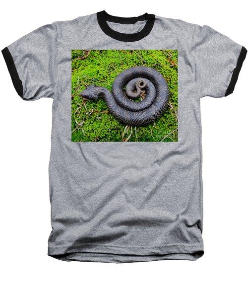 Hognose Spiral Baseball T-Shirt