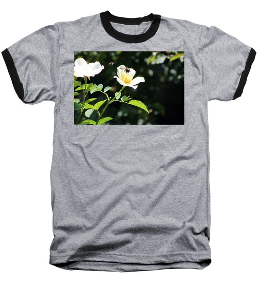 Honey Bees In Flight Over White Rose Baseball T-Shirt