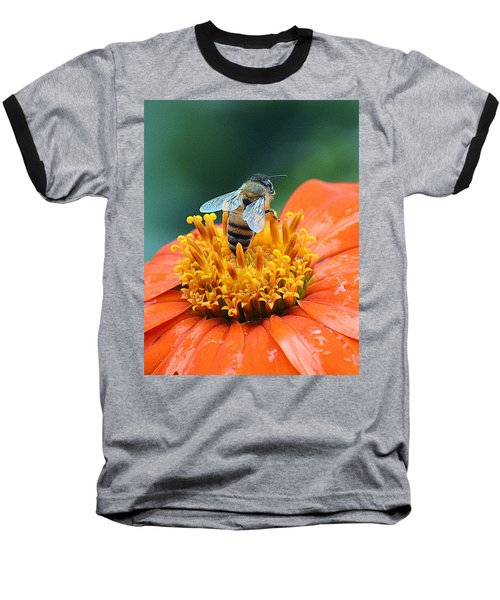 Honeybee On Orange Flower Baseball T-Shirt