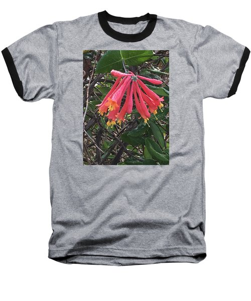 Baseball T-Shirt featuring the photograph Honeysuckle by Kay Gilley
