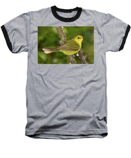 Hooded Warbler Female Baseball T-Shirt by Alan Lenk