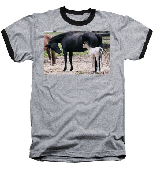 Horse And Colt Baseball T-Shirt by Debra Crank