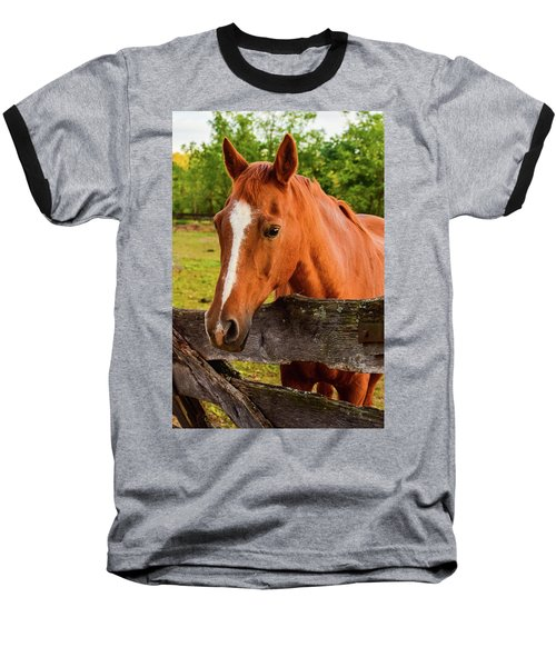 Horse Friends Baseball T-Shirt