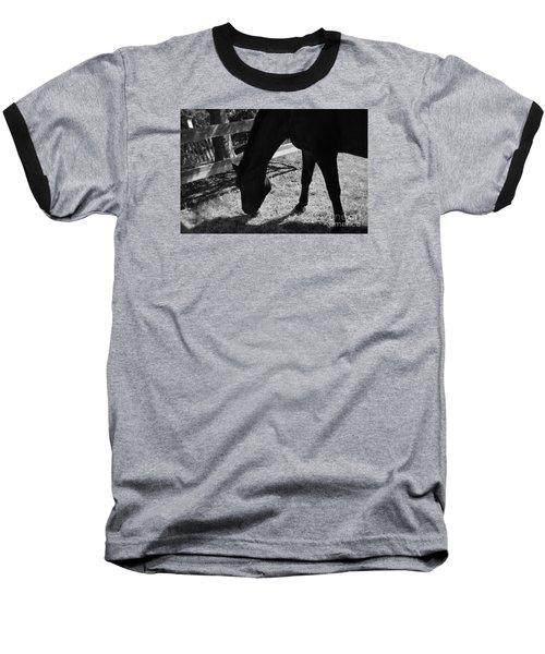 Horse In Black And White Baseball T-Shirt by Tanya  Searcy