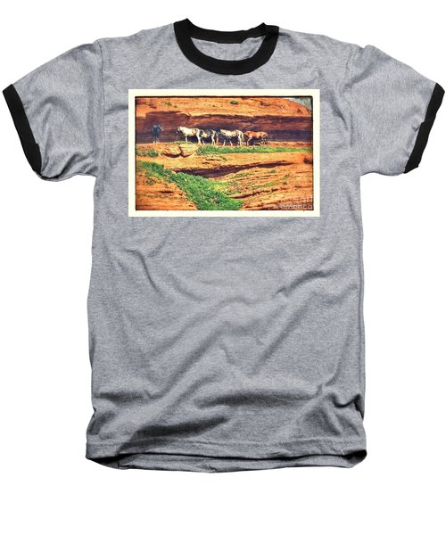Horses Basking In The Sun Baseball T-Shirt