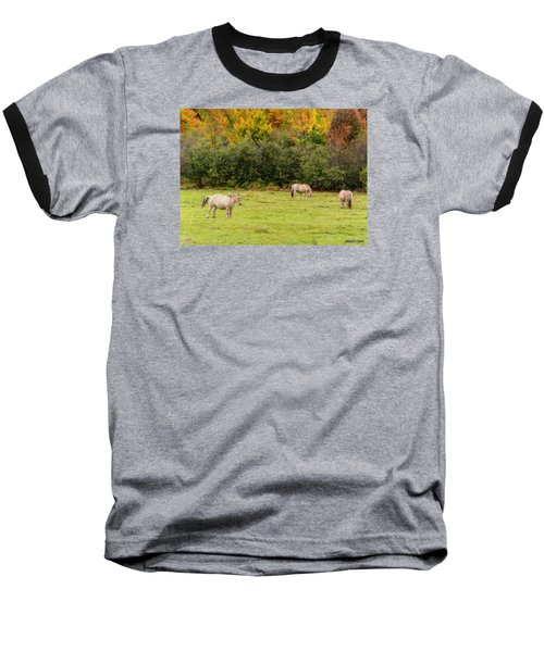 Horses Enjoying A Beautiful Autumn Day Baseball T-Shirt
