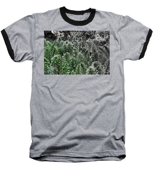 Horsetail Dewpoint Baseball T-Shirt