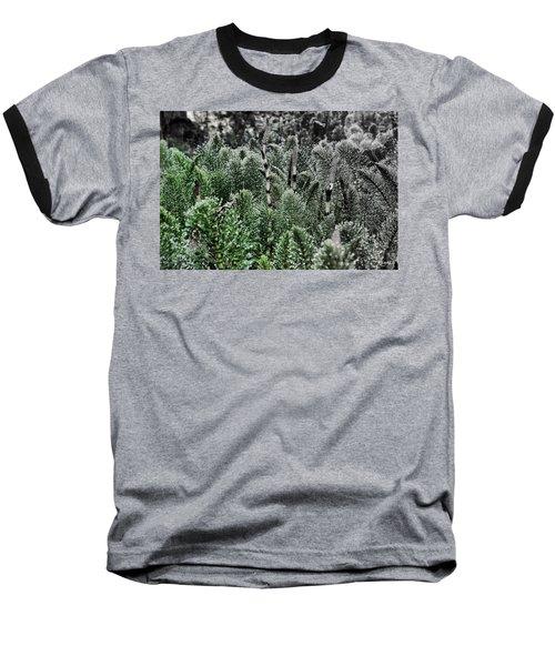 Horsetail Dewpoint Baseball T-Shirt