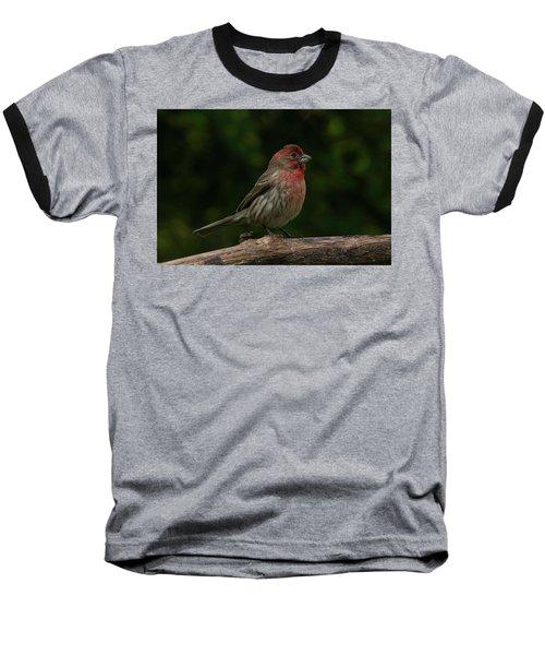 House Finch 2 Baseball T-Shirt