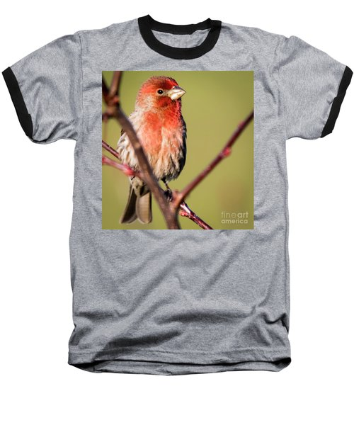 Baseball T-Shirt featuring the photograph House Finch In Full Color by Ricky L Jones