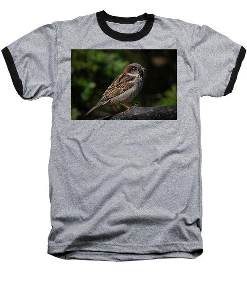 House Sparrow 2 Baseball T-Shirt