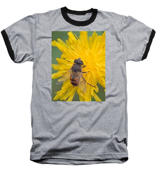 Hover Fly On Sow Thistle Baseball T-Shirt