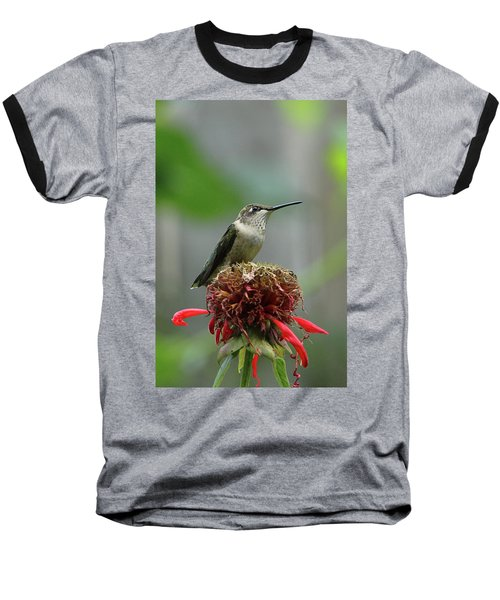 Humming Bird Atop Bee Balm Baseball T-Shirt by David Stasiak