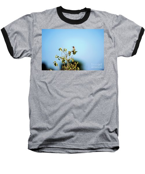 Baseball T-Shirt featuring the photograph Humming Bird On A Branch by Micah May