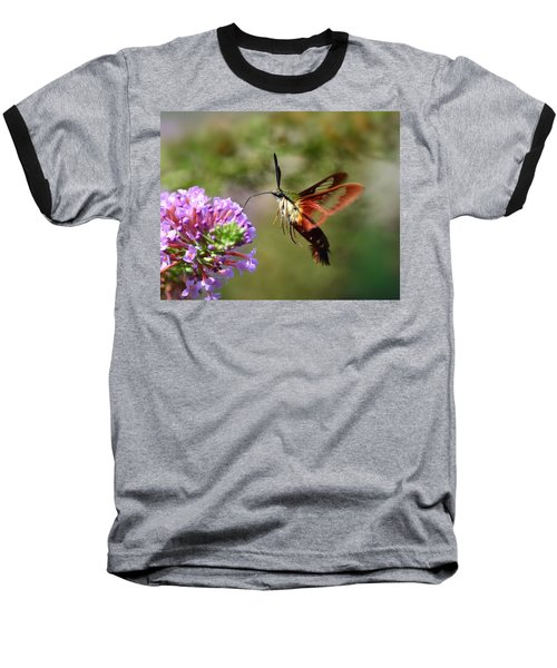 Hummingbird Clearwing Moth Baseball T-Shirt