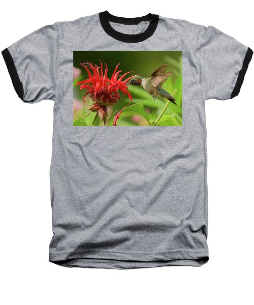 Hummingbird Delight Baseball T-Shirt