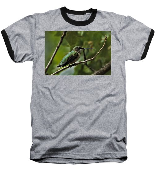 Hummingbird On Branch Baseball T-Shirt
