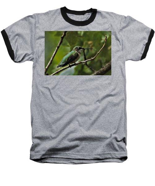 Hummingbird On Branch Baseball T-Shirt