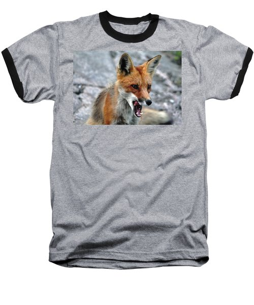 Hungry Red Fox Portrait Baseball T-Shirt by Debbie Oppermann
