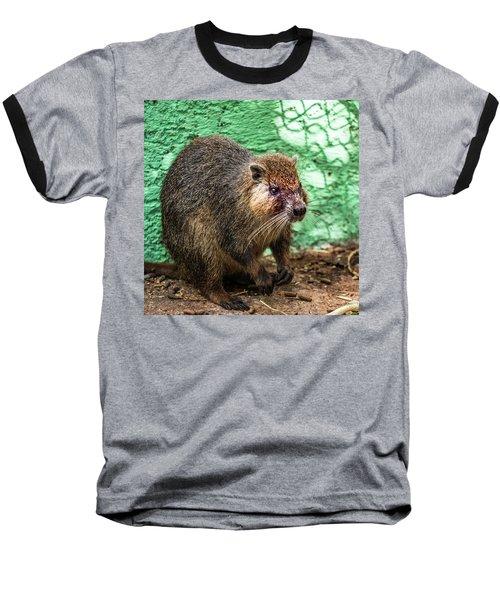 Hutia, Tree Rat Baseball T-Shirt