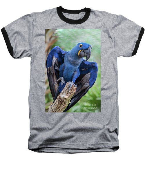 Hyacinth Macaw Baseball T-Shirt