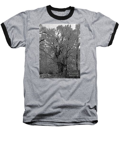 Iced Tree Baseball T-Shirt by Craig Walters