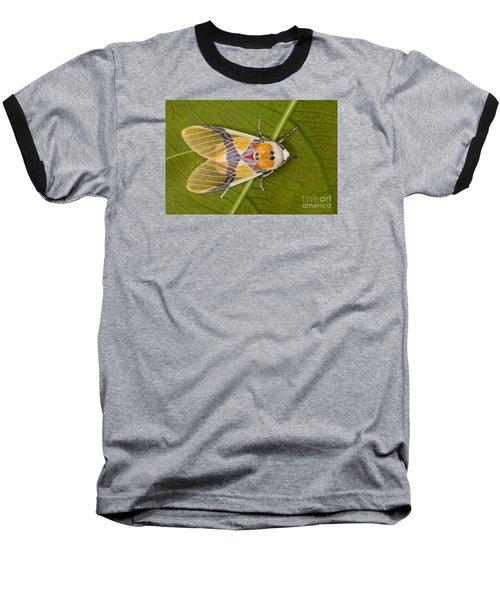 Idalus Carinosa Moth Baseball T-Shirt by Gabor Pozsgai