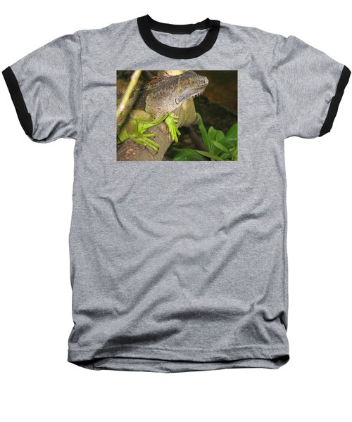 Baseball T-Shirt featuring the photograph Iguana - A Special Garden Guest by Christiane Schulze Art And Photography