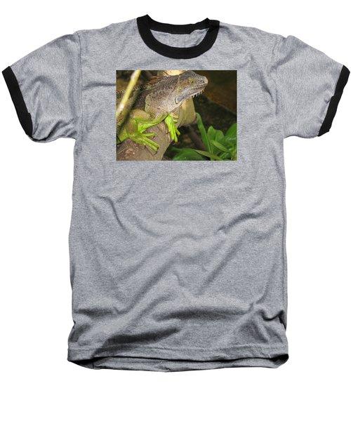 Iguana - A Special Garden Guest Baseball T-Shirt by Christiane Schulze Art And Photography