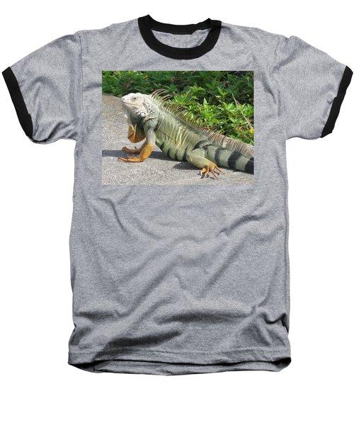 Iguania Sunbathing Baseball T-Shirt by Christiane Schulze Art And Photography