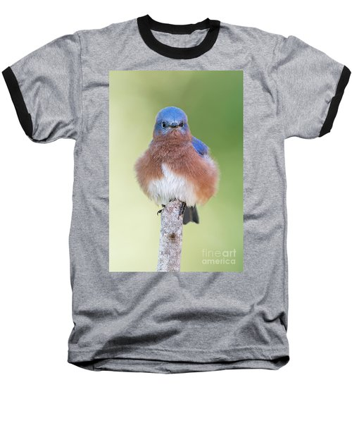 I May Be Fluffy But I'm No Powder Puff Baseball T-Shirt by Bonnie Barry