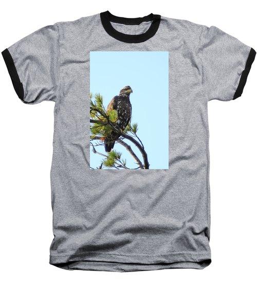 Immature Bald Eagle 1 Baseball T-Shirt