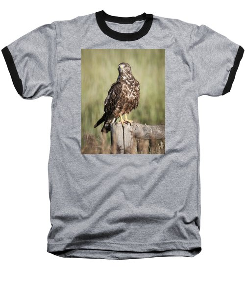 Baseball T-Shirt featuring the photograph Immature Northern Harrier by Daniel Hebard