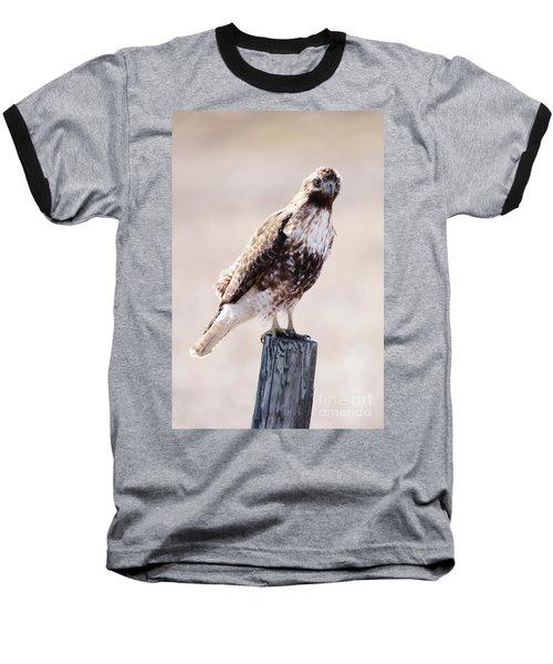 Immature Red Tailed Hawk Baseball T-Shirt