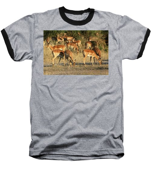Impala Baseball T-Shirt