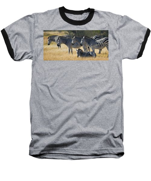 In Line Zebras Baseball T-Shirt