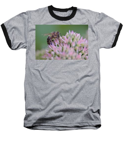 In Search Of Nectar Baseball T-Shirt by Janet Rockburn